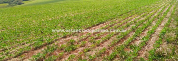 FARM FOR SALE WITH 420 ACRES (170 HA)